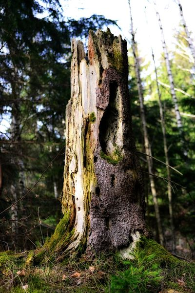 Bark Baumstamm Beautiful Nature Beauty In Nature Expiration EyeEm Gallery EyeEm Nature Lover Field Grass Growth Low Angle View Me My Camera And I Nature Nature Is The Law Old Outdoors Rough Taking Photos Taking Pictures Textured  Tree Tree Trunk Verfall Weathered Wood - Material
