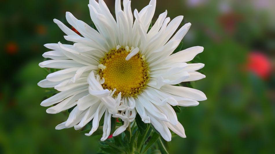 Flower sony xperia z bacground defocus
