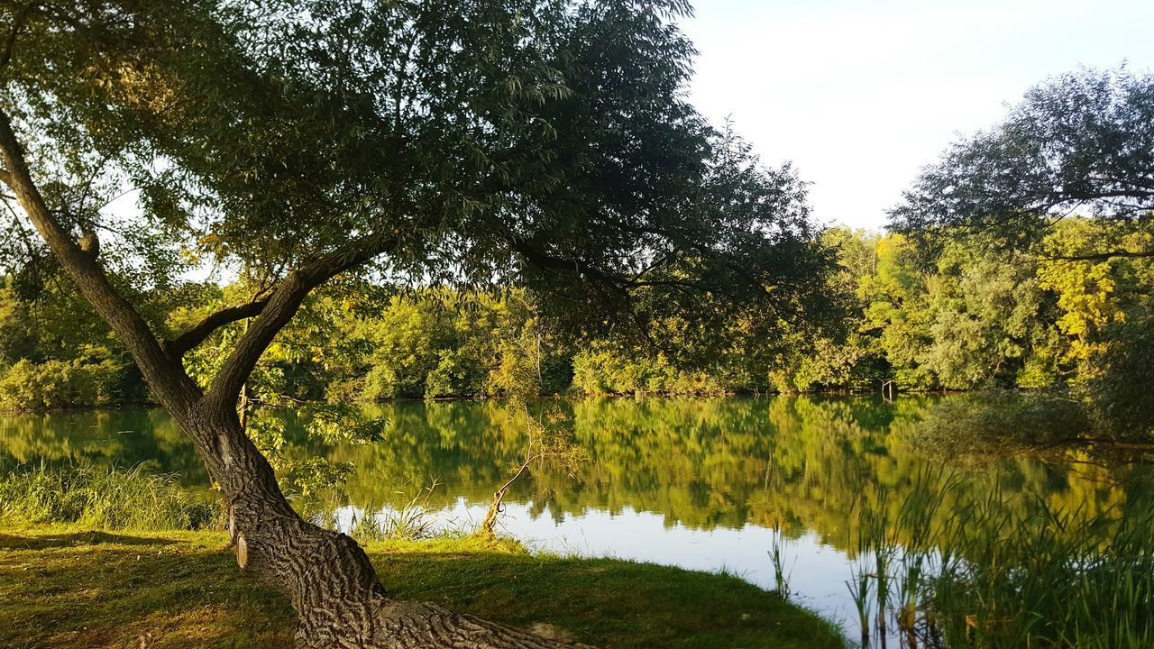 tree, nature, water, growth, lake, beauty in nature, tranquil scene, tranquility, scenics, outdoors, tree trunk, no people, day, green color, landscape, branch, sky, grass