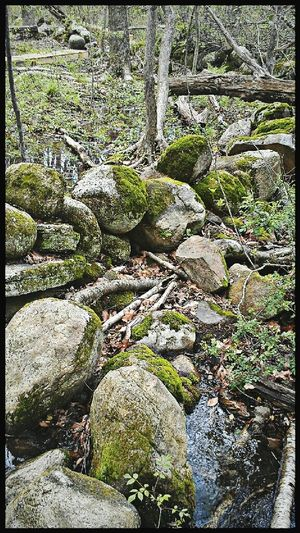 Woods Rocks Moss Into The Woods Into The Wild In Touch With Nature Dartmouth Massachusetts