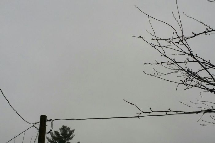 tether, resistance . How's The Weather Today? The Purist (no Edit, No Filter) Branches Sky Clouds Rainy Days