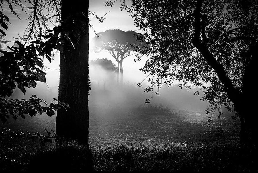 Paradise Blackandwhite Monochrome Bnw Photooftheday EyeEm Best Shots Black And White Mood Place of Heart EyeEm Nature Lover EyeEmBestPics Water Spooky Lake Sky Foggy Tranquil Scene Condensation