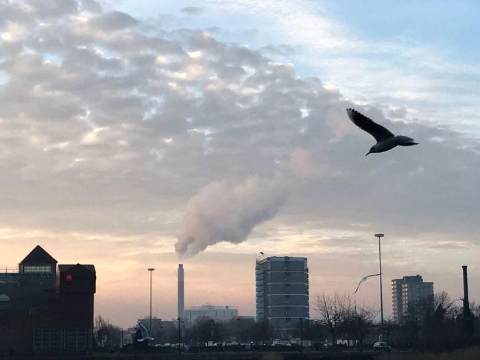 Beautiful Morning Sky Cloud - Sky Flying Smoke Stack Bird Animal Themes London Photography EyeEm Best Shots Art By Laziz