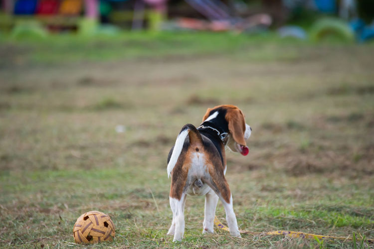 Dog playing on field