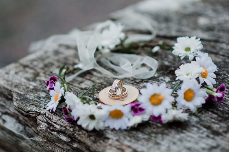 High angle view of white flowers on wood