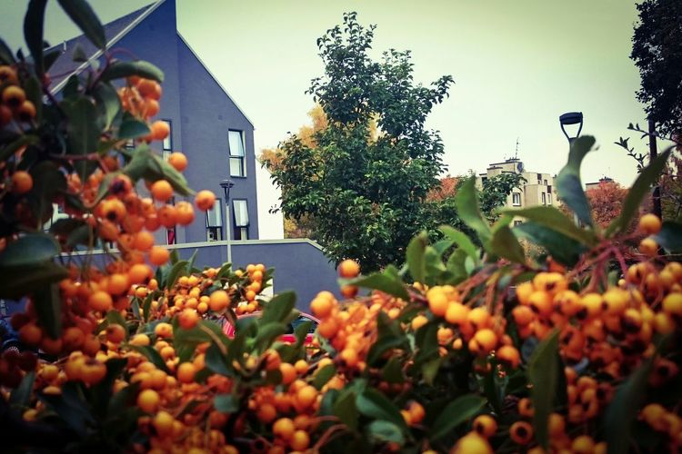 Autumn around town Taking Photos Hanging Out Enjoying Life Urbanexploration Autumn🍁🍁🍁 Out Walking The Colors Of Autmn TOWNSCAPE