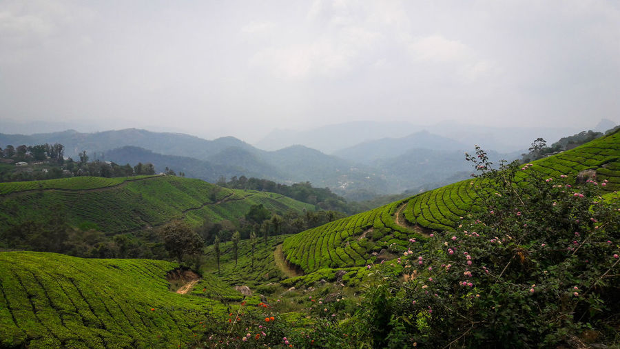 Agriculture Environmental Conservation Asian Style Conical Hat Land Farm Landscape Social Issues Tea Crop Hill Valley Sky Plant Tourism Field Nature Environment City Cloud - Sky Crop  Outdoors EyeEmNewHere