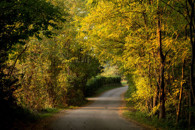 Treviso Autumn Beauty In Nature Day Forest Italy Landscape Montello Nature Nervesa No People Outdoors Plant Road Scenics Single Lane Road Tranquil Scene Tranquility Tree Veneto Yellow