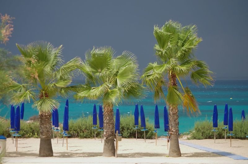 United Colors of Yachting EyeEm Best Shots EyeEmNewHere EyeEm Gallery EyeEm Nature Lover Streetphotography Swednesspt Tree Palm Tree Beach Sea Blue Sand Sky Date Palm Tree Tranquility Horizon Over Water Countryside Seascape Tranquil Scene Calm
