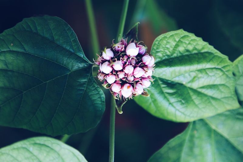 Plant Part Pink Color Petal Nature Close-up Nature Outdoors Pink Flower Pink Color Garden Full Frame Green Leaves Room For Text Botany Top View Floral Pattern Floral Plant Part Leaf Plant Beauty In Nature Close-up Flower Growth Flowering Plant Freshness Green Color Focus On Foreground Invertebrate