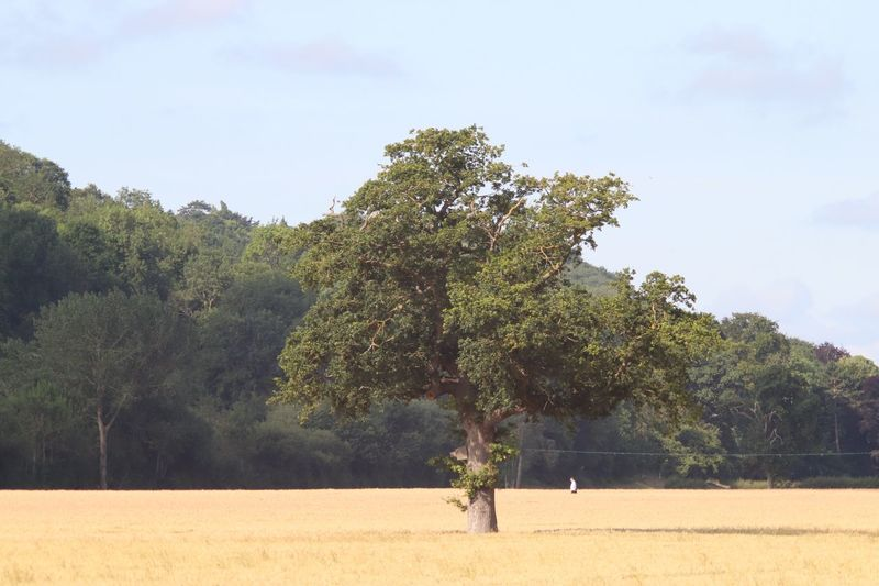 Tree in crop