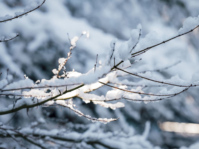 Beauty In Nature Blizzard Branch Close-up Cold Temperature Day Extreme Weather Focus On Foreground Frost Frozen Growth Ice Melting Nature No People Outdoors Plant Snow Tranquility Tree Twig White Color Winter