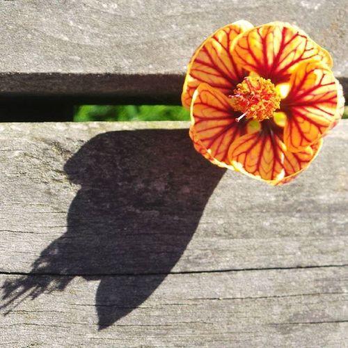 Butilon Flower