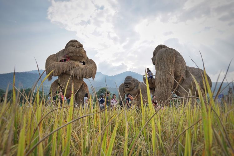 Rampage  Rice Field Chiang Mai | Thailand Sky Plant Land Field Cloud - Sky Nature Growth Landscape Farm