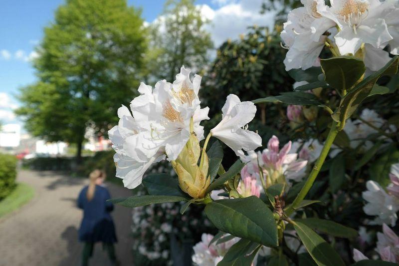 Flower Makro Flower