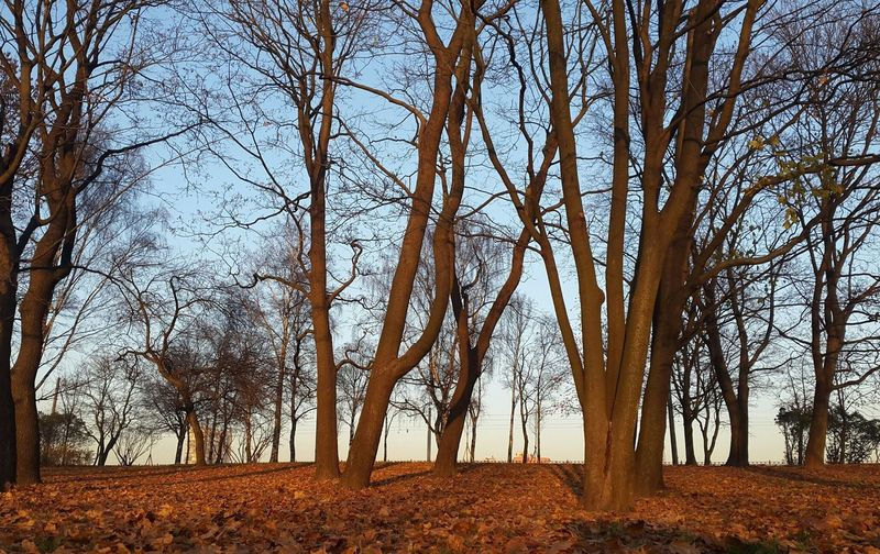 Park Sity View Park Shadow Tree Bare Tree Branch Forest Rural Scene Tree Trunk Autumn Sky Landscape Tree Area