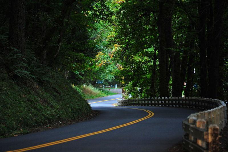 Empty Road Along Lush Trees