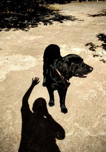 Dark and Black Shadow And Light Pet Portraits Eyeem Market Petlovers Black & White Pets Beach Dog Shadow Sand Sunlight Black Labrador Pet Owner Labrador Retriever Long Shadow - Shadow