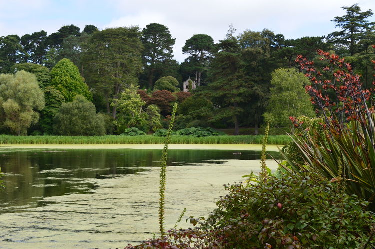 Beauty In Nature Calm Day Green Green Color Growing Growth Idyllic Landscape Lush Foliage Mount Stewart Nature Non Urban Scene Non-urban Scene Northern Ireland Outdoors Plant Remote Scenics Sky Tranquil Scene Tranquility Travel Destinations Tree Water