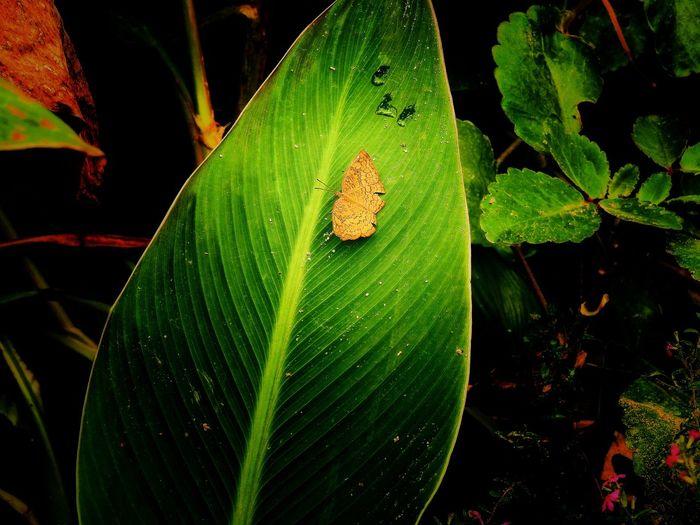 Nikon P900 Butterfly Nature Eeyemedit Vscocamedit