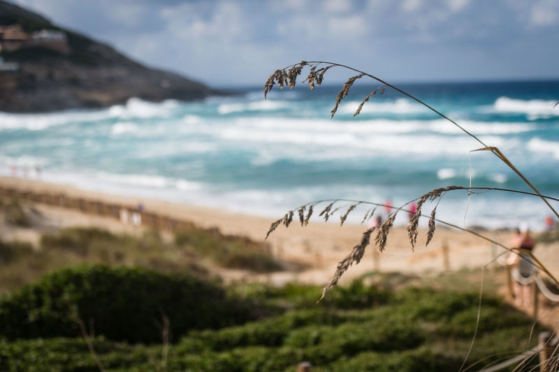 Beach Water Sea Nature Tranquil Scene Focus On Foreground Cloud - Sky Horizon Over Water Non-urban Scene Sky No People Beauty In Nature Land Scenics - Nature Tranquility Plant Day Beach Growth Close-up Outdoors