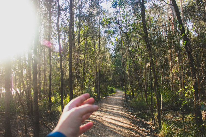 Beauty In Nature Day Forest Forest Path Growth Human Body Part Human Hand Leisure Activity Lifestyles Nature One Person Outdoors Path Personal Perspective Real People Sky Sunbeam Sunlight Tranquility Tree The Secret Spaces