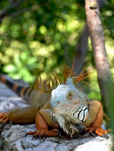 Close-up of a lizard on tree