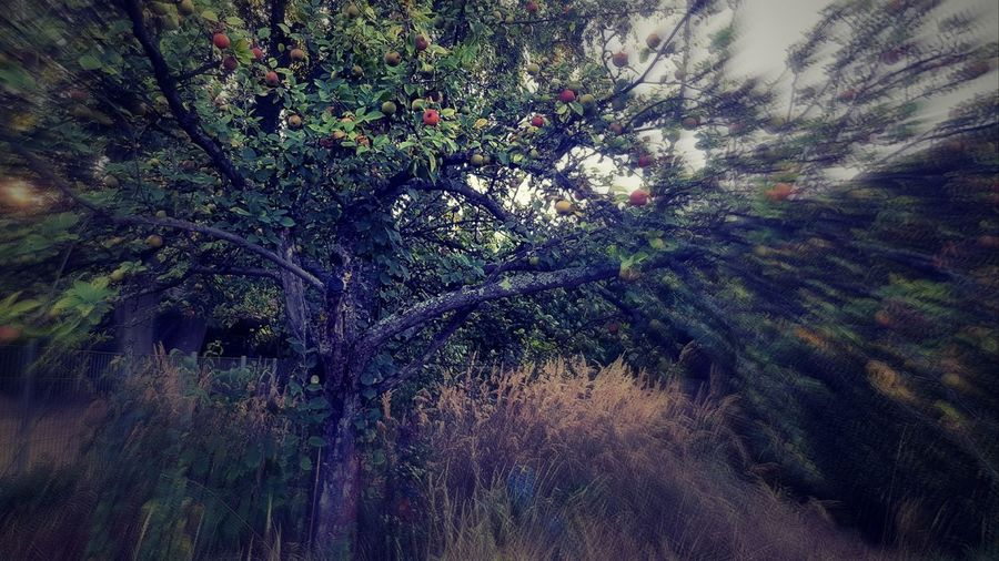 Tree Nature Apple Apfelbaum  Filterphotography Tree Full Frame Multi Colored Backgrounds Sky Close-up