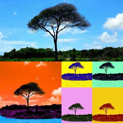 Tree Sky Nature Tropical Climate Photo♡ Nature_collection Landscape_Collection Landscape_lovers Photography Themes Photography Artphotography Scenics photolove