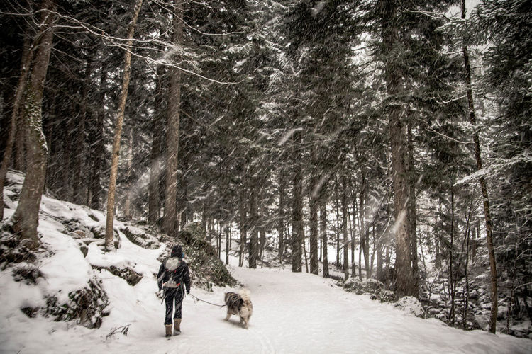 Rear view of person walking with dog on snow covered landscape