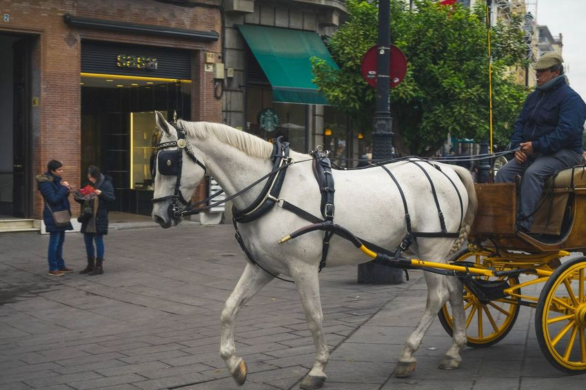 Sevilla #hdrphotography #horse Horse Horse Cart Domestic Animals Transportation Horsedrawn One Animal Mode Of Transport Day