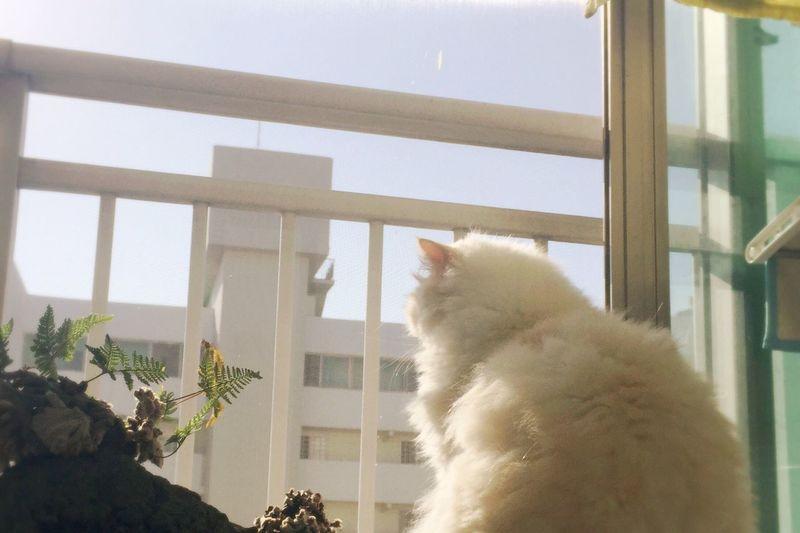 Thinking Coffee Heema Cute Boy Cat