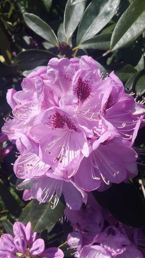 Flower Purple Flowers,Plants & Garden Flowers, Nature And Beauty Nature Samsungphotography SamsungGalaxyAlpha