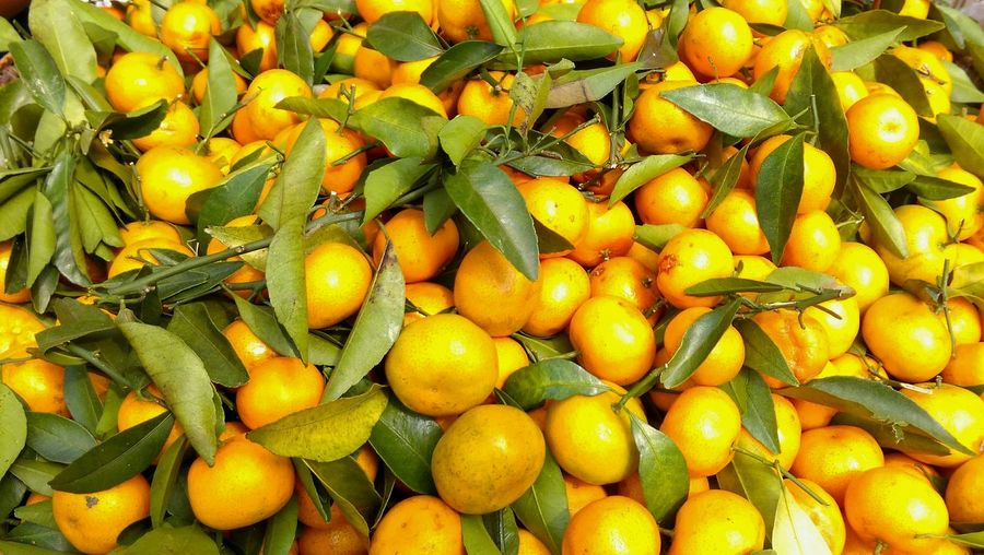 Freshness Fruit Healthy Eating Close-up Food Yellow Market Fruitphotography Fruitlover Tangerines Vibrant Color Healthy Food Eat More Fruit Eating Healthy Colorphotography Myanmar Burmese Market Fresh Fruits