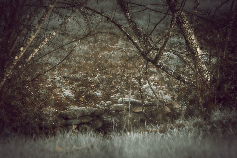 Bare Tree Beauty In Nature Branch Cold Temperature Day Forest Grass Landscape Nature No People Outdoors Tranquility Tree Winter