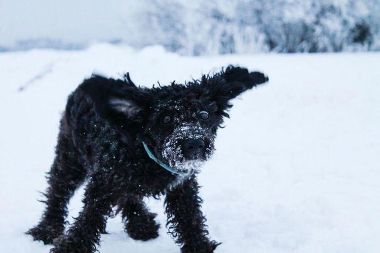 I Love My Pet My Dog <3 Dog Love Chapa AnimaLs <3 Dog