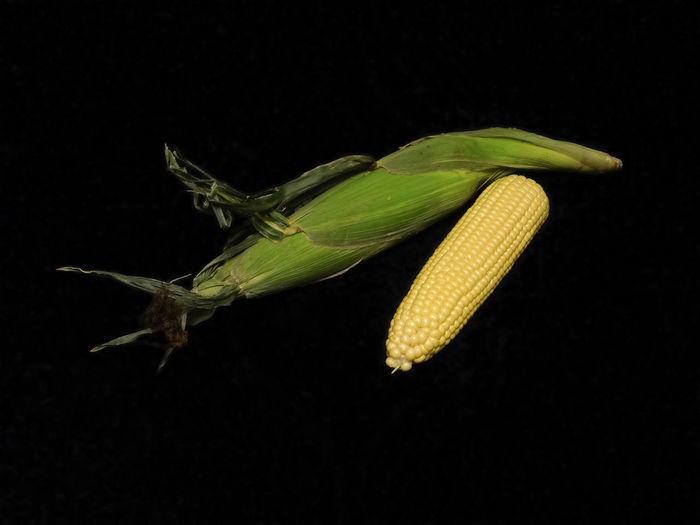 Agriculture Black Background Cereal Close-up Corn Cropped Food Food And Drink Freshness Maize Nature No People Studio Shot