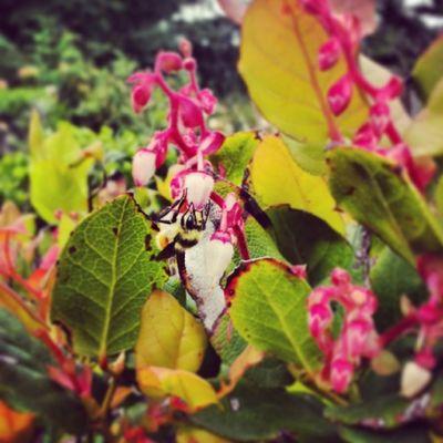 My bee friend! Otterpoint Oregoncoast Picoftheday Bee