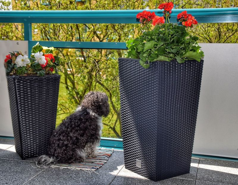 """My very high point from which i can survey the entire area"" :-) Pets Potted Plant Animal Themes One Animal Plant Domestic Animals Day Flower Mammal No People Outdoors Nature Nikon Scenics Bolonka Observation Point Dog Dog Love"