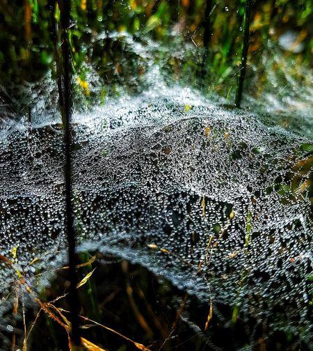 """ La cotidianeidad nos teje, diariamente, una telaraña en los ojos "" Oliverio Girondo Water Spider Web Spiderweb no people Day Outdoors Nature Close-up Beauty In Nature EyeEm Selects EyeEmNewHere Tranquility Drops_creative"