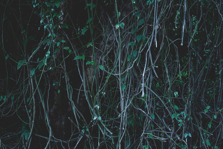 Backgrounds Bare Tree Beauty In Nature Branch Close-up Forest Grass Growth Nature Night No People Outdoors Scenics Tranquil Scene Tranquility Tree Tree Trunk
