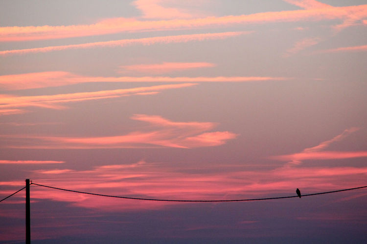 Bird enjoying the sunset Atmosphere Beauty In Nature Bird Cloud Cloud - Sky Cloudscape Dramatic Sky Majestic Moody Sky Nature No People Orange Color Outdoors Outline Power Line  Scenics Silhouette Sky Sunset Tranquil Scene Tranquility