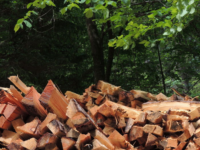 Day Deforestation Forestry Industry Heap Large Group Of Objects Log Lumber Industry Nature No People Outdoors Stack Timber Tree Wood - Material Woodpile