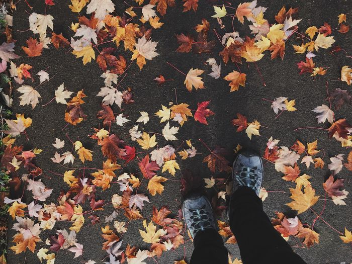 Fall Autumn Leaf Change Low Section Human Leg Leaves Standing High Angle View Real People Day Nature Maple Leaf Outdoors Directly Above One Person Human Body Part Beauty In Nature Maple Close-up People
