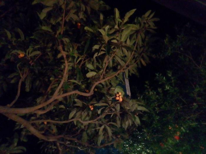 Tree Outdoors Zitronenbaum ❣
