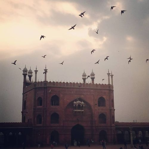 JamaMasjid Morningmotivation Architecturelover Beautiful Pigeon Oldcity Birds Sunrise Cloudy Sun Morning Freshness Morningsky Picoftheday HASHTAG Delhi Wanderlust Photography Naturelovers Followme Architecturephoto Buildings Bird Flying Architecture Travel Destinations Sky Built Structure City Arch Outdoors History Triumphal Arch Building Exterior Low Angle View