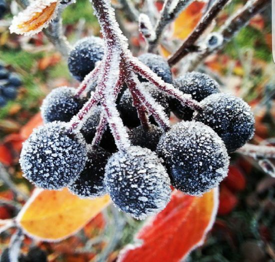 Close-up of plant in winter
