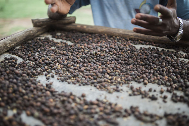 Bean Close-up Coffee Coffee Bean Cuba Farming Food Food And Drink Human Body Part Human Hand Men Viñales Working