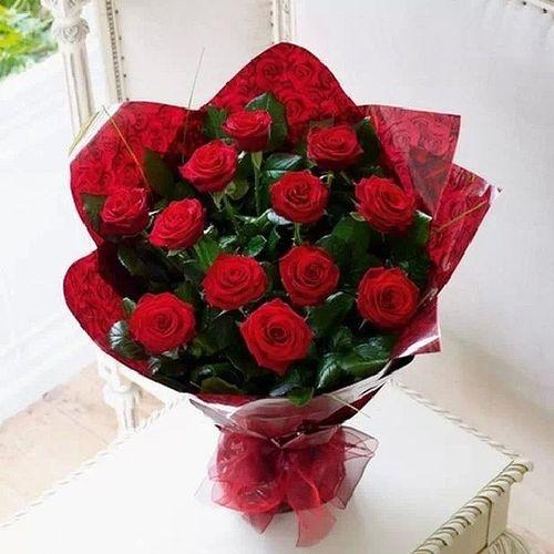 Happy rose day Follows Rosé Flowers Happyroseday follower followme follownow followmeplease f4f instagood instalike follow4like likess likesforlike likesfortags likeme likesforfollow likes