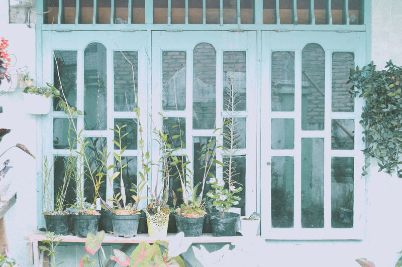 Potted plants outside window of building
